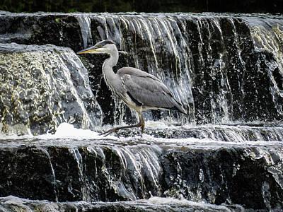 Waterfall Heron Poster