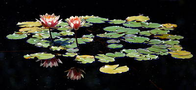 Poster featuring the painting Waterlily Panorama by Marilyn Smith