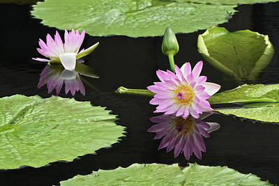 Waterlily Reflections In Dark Water Poster by Byron Varvarigos