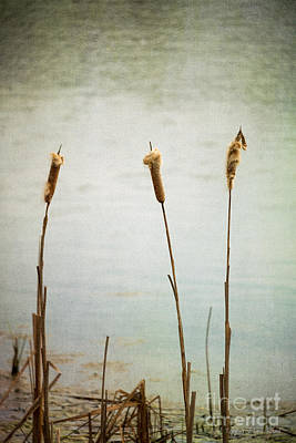 Poster featuring the photograph Water's Edge No. 2 by Todd Blanchard