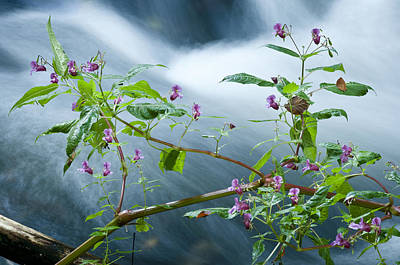 Waterscapes - Lilac Blossom Poster by Andy-Kim Moeller