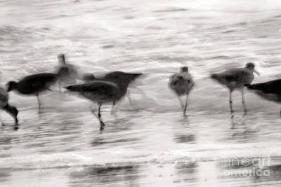 Plundering Plover Series In Black And White 3 Poster by Angela Rath