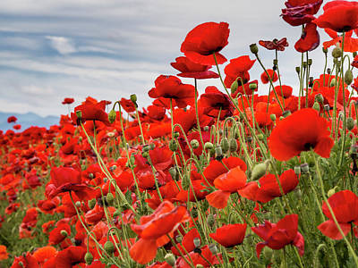 Waving Red Poppies Poster by Jean Noren
