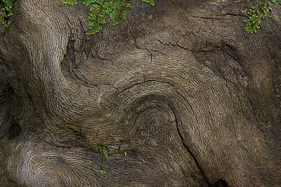 Weathered Tree Root Poster by Mike Eingle
