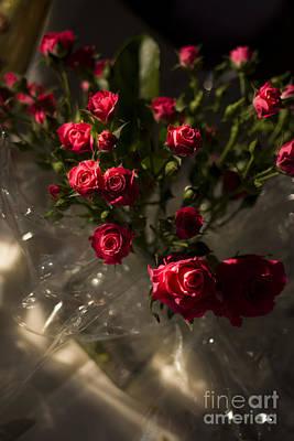 Wedding Roses Poster
