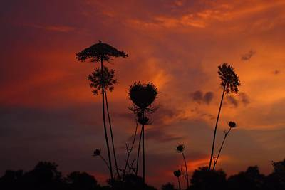 Weeds In The Sunrise Poster by Kathryn Meyer