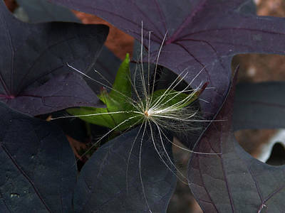 Weeds N Seeds Poster