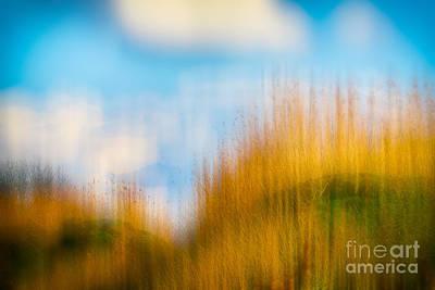 Weeds Under A Soft Blue Sky Poster