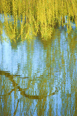 Weeping Willow - Reflections In Water Poster by Nikolyn McDonald