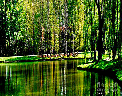 Weeping Willow Tree Reflective Moments Poster