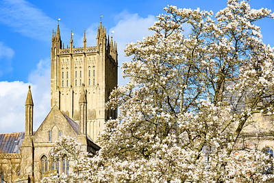 Wells Cathedral And Spring Blossom Poster