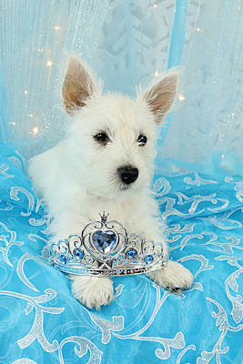 Westie Princess Poster by Amanda Stadther