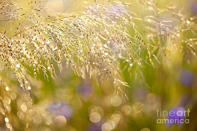 Wet Grass In Bokeh Circles Poster