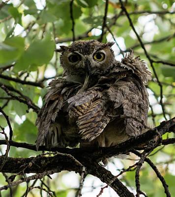 Wet Owl Poster