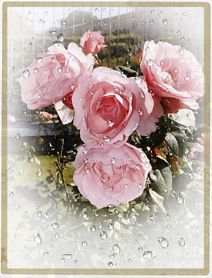 Wet Pink Roses Poster