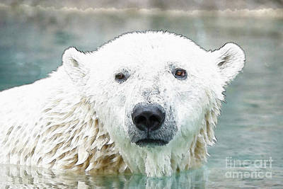 Wet Polar Bear Poster