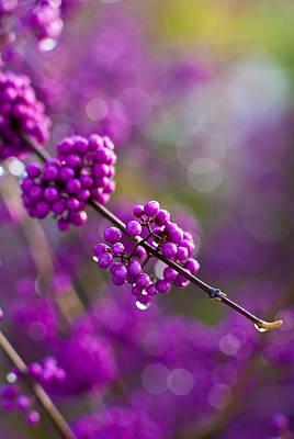 Wet Purple 2 Poster