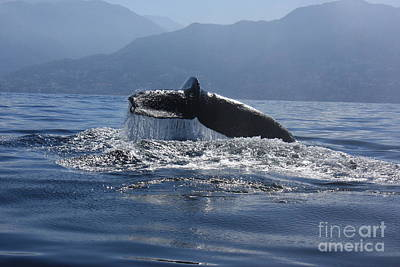 Poster featuring the photograph Whale Fluke by Nicola Fiscarelli