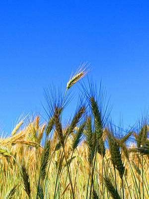 Wheat - A Cut Above Poster