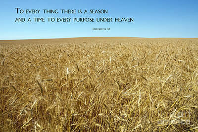 Wheat Field Harvest Season Poster