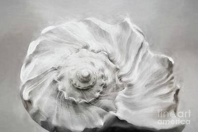 Poster featuring the photograph Whelk In Black And White by Benanne Stiens