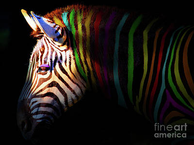 When Zebras Dream 7d8908 Poster by Wingsdomain Art and Photography