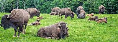 Where The Buffalo Roam Poster by Carlos Ruiz