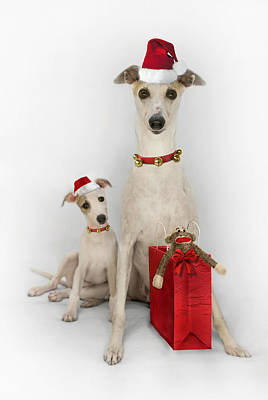 Whippet Christmas Poster by John Clum