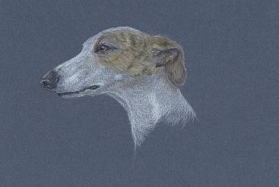 Whippet Study Poster by Susan Coons