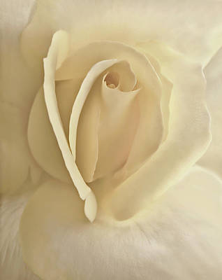 Whisper Of A Soft Yellow Rose Flower Poster