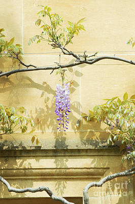 Whispering Wisteria Poster by Tim Gainey