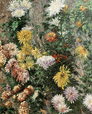 White And Yellow Chrysanthemums In The Garden At Petit Gennevilliers Poster by Gustave Caillebotte