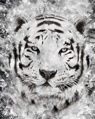 White Bengal Tiger Portrait Poster