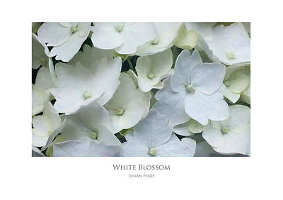 Poster featuring the digital art White Blossom by Julian Perry