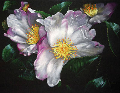 White Camellias On Black Poster by Christopher Reid