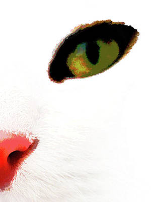 White Cats Face Poster