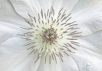 White Clematis Flower Garden 50121b Poster
