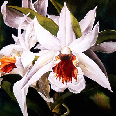 White Dendrobium Orchid Poster by Alfred Ng