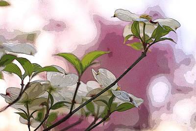 White Dogwood Flowers Poster by Andrea Kappler