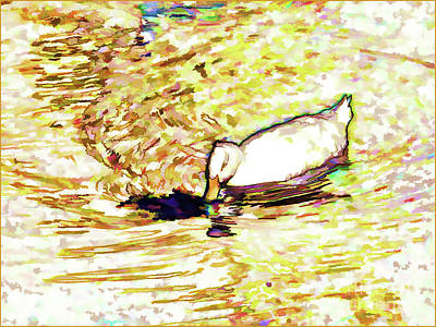 White Duck Swim In Pond 2 Poster