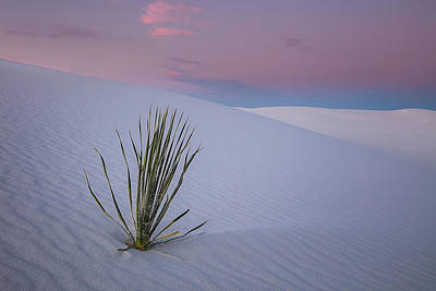 Poster featuring the photograph White Dunes by Edgars Erglis