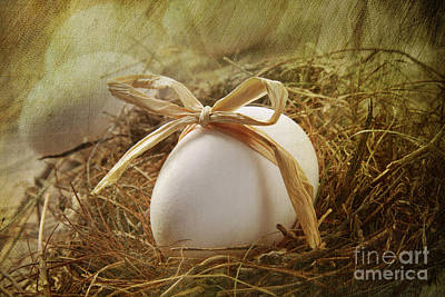 White Egg With Straw Bow In Nest Poster by Sandra Cunningham