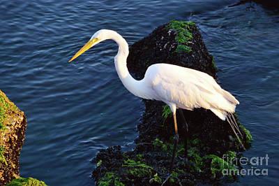 White Egret At Sunrise - Barnegat Bay Nj  Poster
