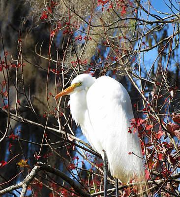 White Egret Bird Poster