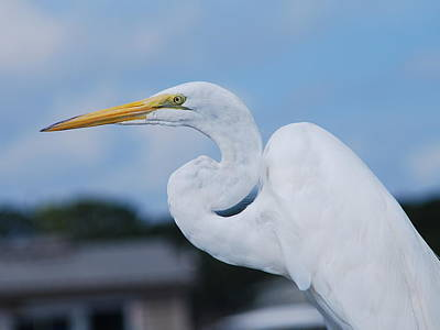 Poster featuring the photograph White Egret by Margaret Palmer