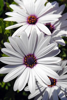 White Flower 1 Poster