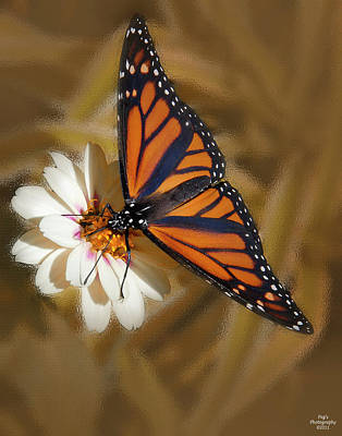 White Flower With Monarch Butterfly Poster