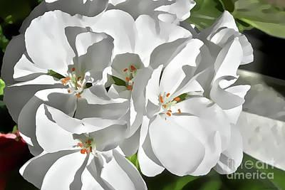 White Geraniums Poster