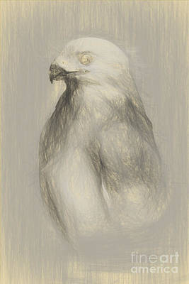 White Goshawk Artwork Poster