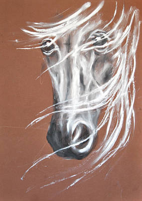 White Horse Portrait 3 -  By Diana Van Poster by Diana Van